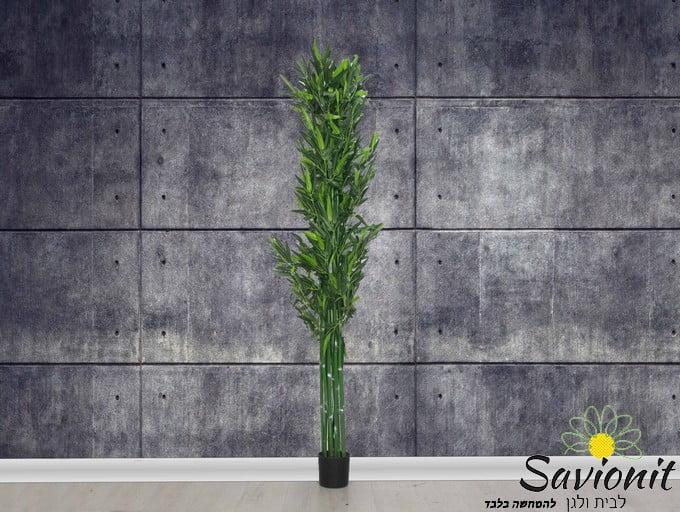 """עץ במבוק ירוק 180 ס""""מ"""