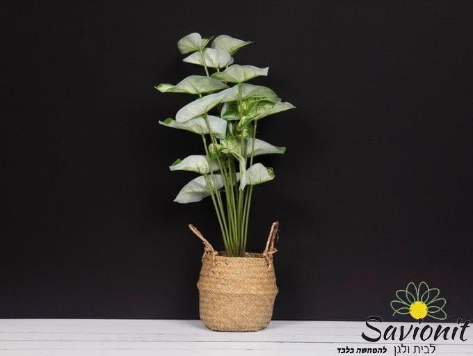 עציץ ראטן עם צמח ירוק מולבן